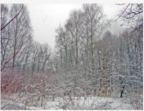 Прогноз погоды на февраль 2014 г
